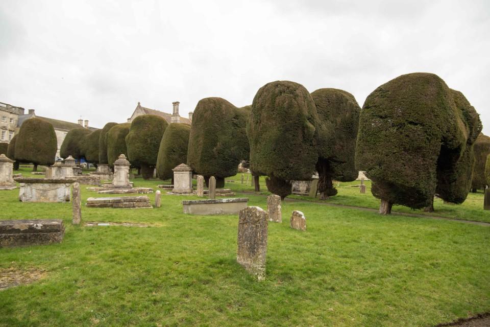 Painswick Yews